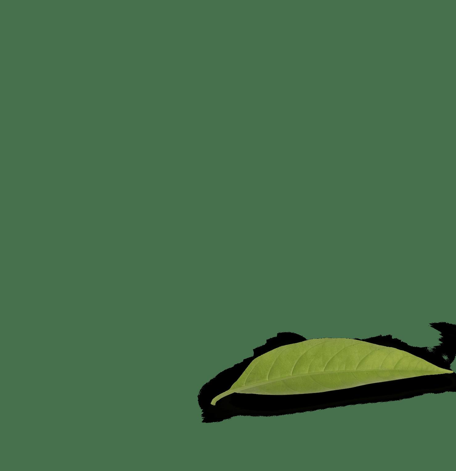 Leaf-five-min