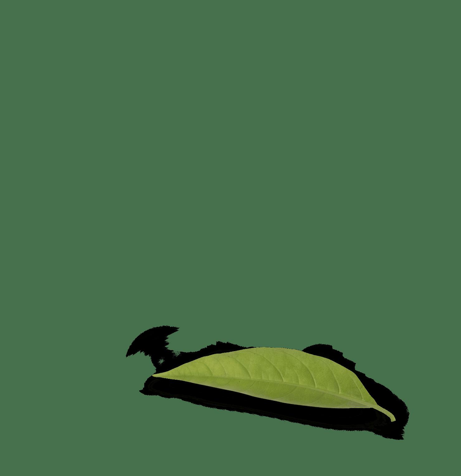 Leaf-three-min